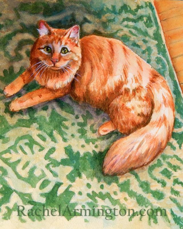 Long Hair Orange Cat