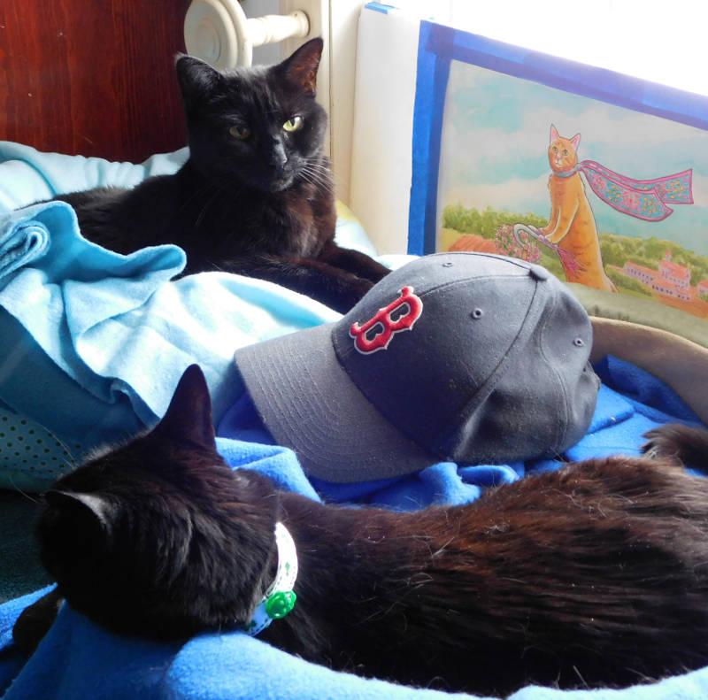 Cat Red Sox